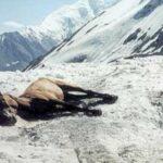 Podnikatelské záhady III: Syndrom mrtvého koně